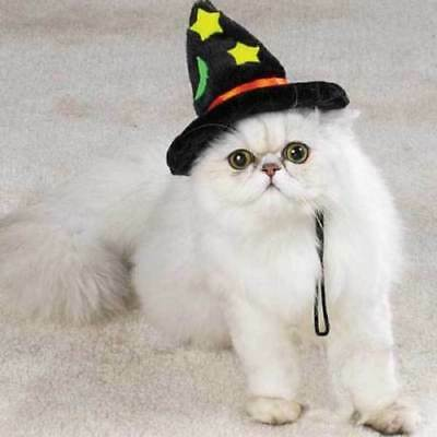 Halloween Hat - Cat or Dog Plush Witch Witches Hat - Halloween Costume Hat](Cat Dog Costumes Halloween)