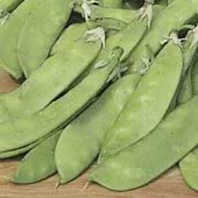 50 SNOW PEA Pisum Sativum Vegetable Seeds ...
