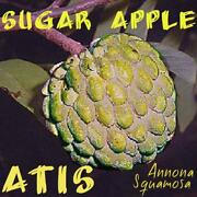 Custard Apple