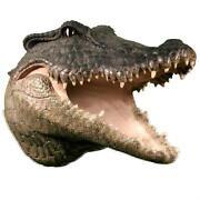 Alligator Mount