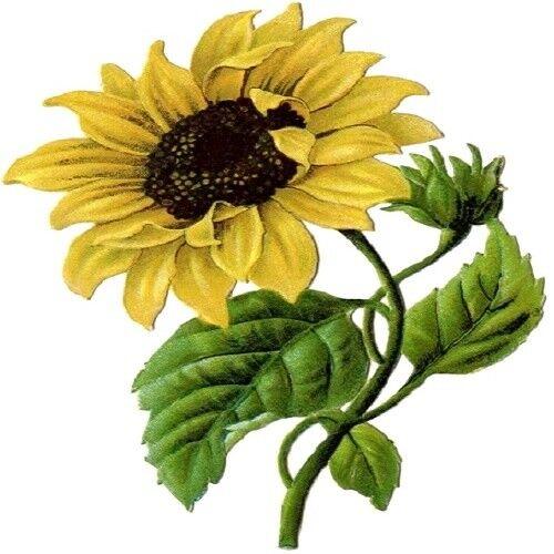 30 Custom Vintage Sunflower Personalized Address Labels