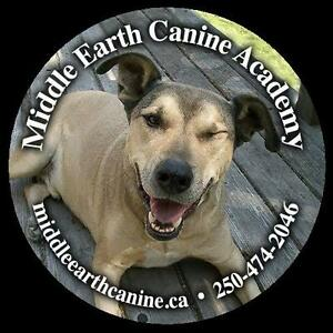 Professional Dog Training Services for Victoria & the WestShore