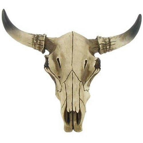 Decorative Cow Skulls Ebay