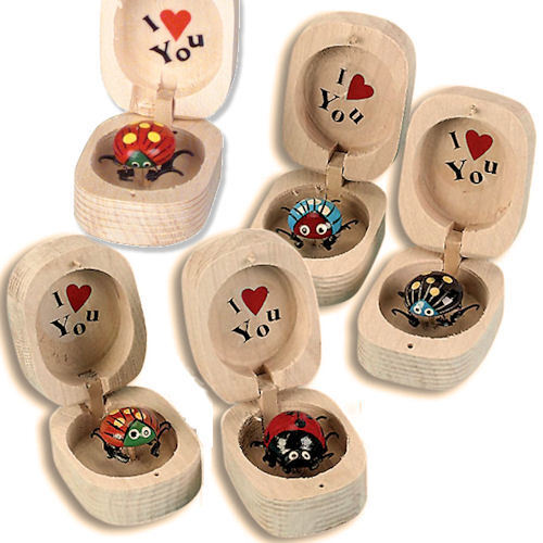 Bug in Wood Nut Box Moving Novelty I Love You Toy Bulk Lot (Pack of 48)