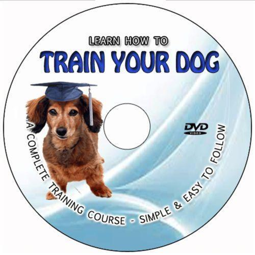 Dog Training Dvd With Lead And Collar To Buy