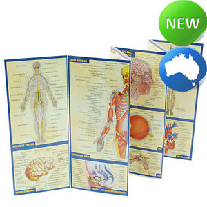 Quick Study Guide - Anatomy A4 (Laminated) - Nurse | Nursing | Education