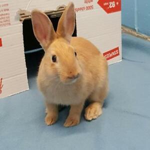"Young Male Rabbit - Dwarf: ""Petri"""