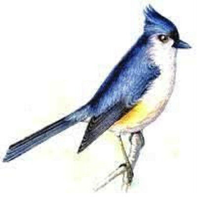 30 Custom Blue Bird Personalized Address Labels