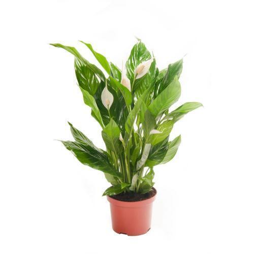House plants ebay Images of indoor plants