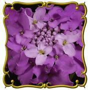 Bulk Wildflower Seeds