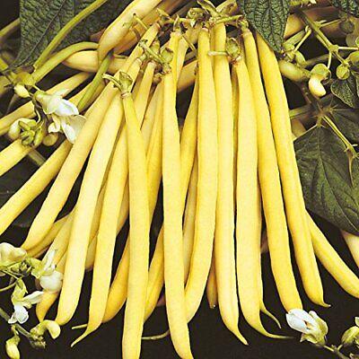 Heirloom YELLOW Wax Bean Pole KENTUCKY WONDER 200 SEEDS Very PRODUCTIVE LongPods - Kentucky Wonder Beans