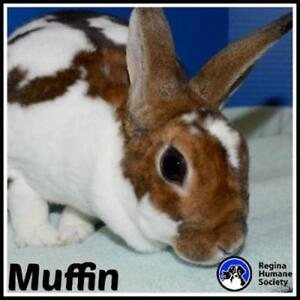 "Adult Female Rabbit - Bunny Rabbit: ""Muffin*"""