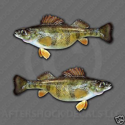 Yellow Perch Fishing Decal Set Pond Lake Boat Perching Sticker Erie