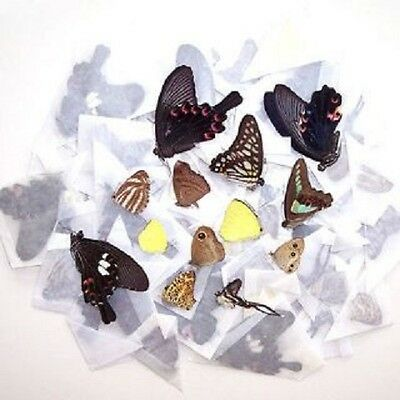 50 BUTTERFLIES MOTHS PAPERED UNMOUNTED WINGS CLOSED WHOLESALE LOT MIX
