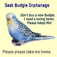 Sask Budgie Orphanage & Rescue