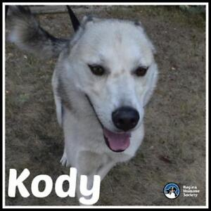 "Adult Male Dog - Husky-Shepherd: ""Kody"""