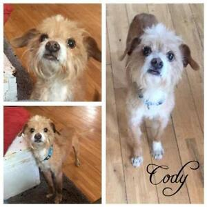 """Young Male Dog - Chinese Crested Dog: """"Cody"""""""