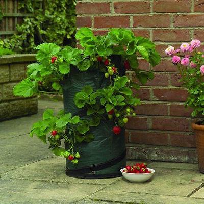 Gardman 30x60cm Garden Strawberry Pop up Planter, 8 Planting & 6 Drainage Holes