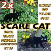 Garden Cat Scare