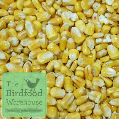 Whole Maize 20kg | Poultry Food, Waterfowl, Pigeon, Goose, Duck Feed