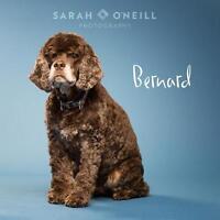 "Senior Male Dog - Cocker Spaniel: ""Bernard"""