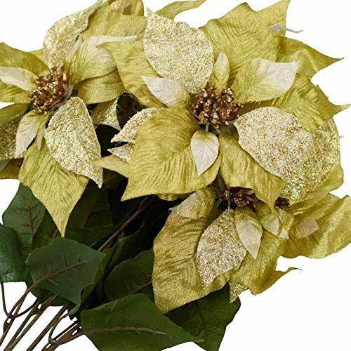 Green and Gold Holly Bush