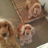 Dog Lovers Please Apply (Paid position) - Pet Sitter Wanted