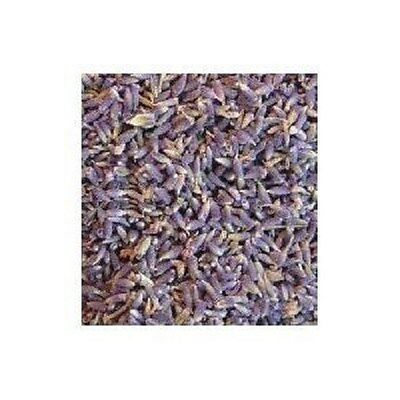 Lavender flower herb (extra) 2 oz wiccan pagan witch magick herbs ritual