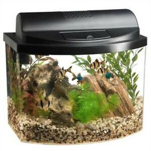 Looking for betta Tanks!!