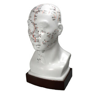 Acupuncture - Model Head