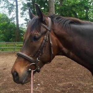 "Young Male Horse - Thoroughbred: ""Whyistherumgone"""