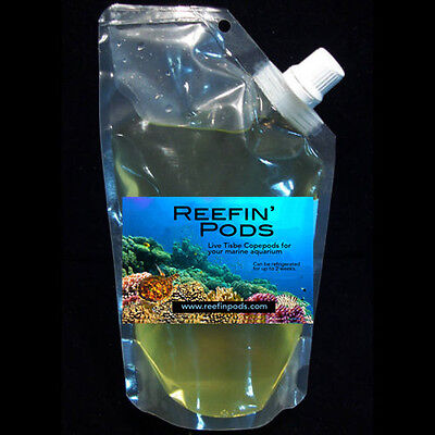 SALE Reefin' Pods LIVE COPEPODS  Pods  for dragonettes and mandarins FALL SALE