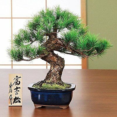 Hand craft Bonsai Replica Mt.Fuji Pine tree Matsu Good fortune by SuzukiToyoha