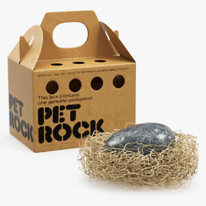 4 year old pet rock