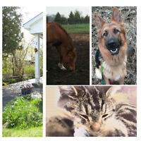 Going Away? Need a pet or house sitter?