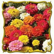 Bulk Flower Seeds