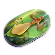 Other Insect Collectibles
