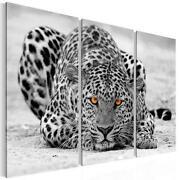 Bild Leopard