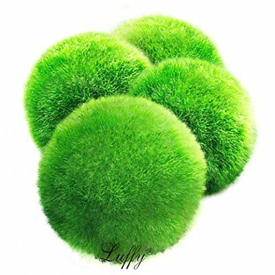 4 LUFFY Marimo Moss Balls - Giant, Eco-Friendly Aquarium Product New](Moss Ball)