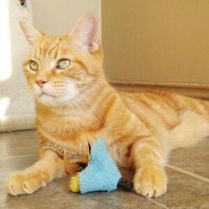 """Adult Male Cat - Domestic Short Hair: """"Brass"""""""