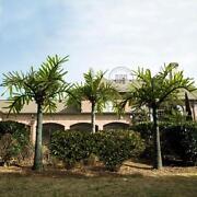 LED Palm Tree