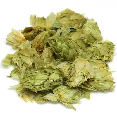 Hops whole herb 1 oz  wiccan pagan witch magick herbs ritual