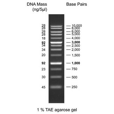 1 Kb Plus Dna Ladder 0.5 Ml Ready-to-use For Agarose Gel