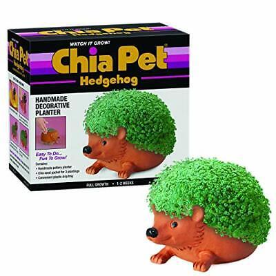 Chia CP438-01 Pet Hedgehog Terra Cotta