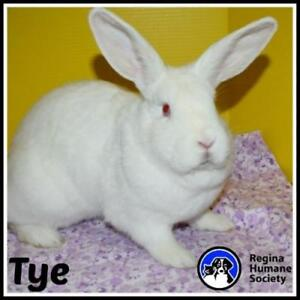 "Adult Female Rabbit - Bunny Rabbit: ""Tye*"""