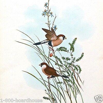 3 Vintage Original All Different AUDOBON SMALL BIRD ART LITHO Prints 1920s NOS