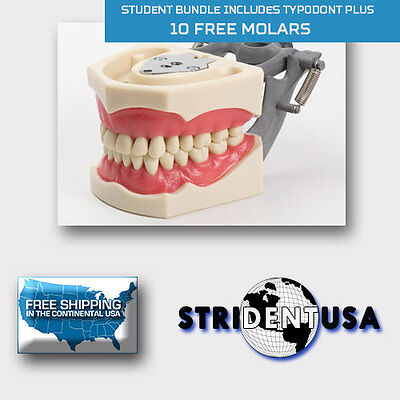 Dental Typodont 860 Bundle Pack 10 Extra Molars Fits Columbia Brand Teeth
