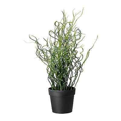 "IKEA artificial potted plant corkscrew rush 16"" green lifelike nature herb Fejka"