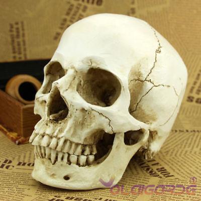 1:1 Realistic Life Size Human Anatomy White Resin Replica Skull Halloween Decor