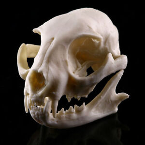 Plutus Cat Skeleton Head Skull Halloween Statue Resin Animal Model 1:1 Life Size